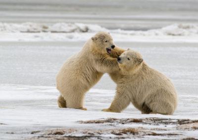 Save the Arctic National Wildlife Refuge